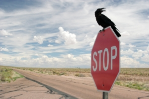 crow on stop sign